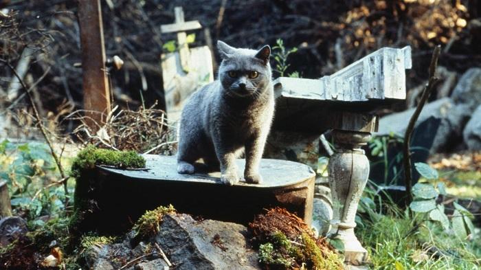 Кадр из фильма *Кладбище домашних животных*.