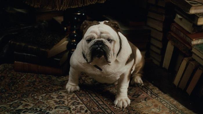 В фильме 2009 года у Ватсона, например, точно есть бульдог.