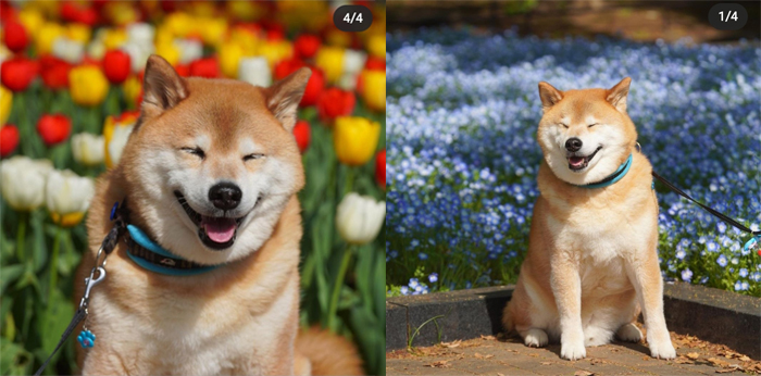 Улыбчивый пес Марутару.