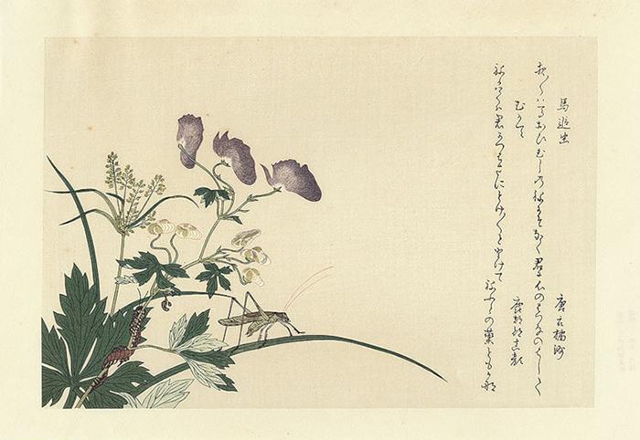 Рисунки Утамаро о жизни насекомых удивительно подробны.