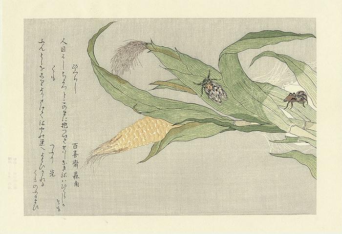 Утамаро ввел новшество - цветной контур.