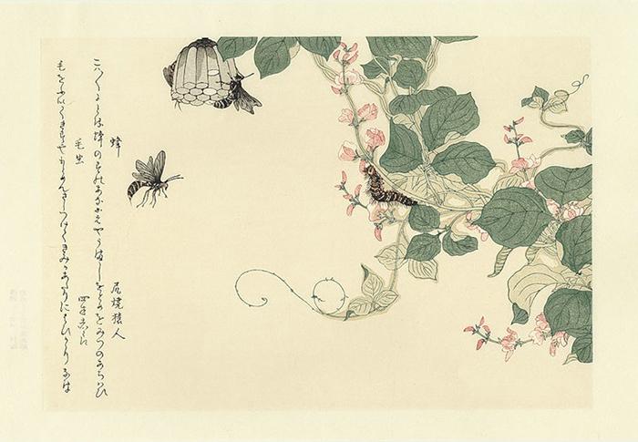 Ранее мастера гравюры не обращались к жизни насекомых.