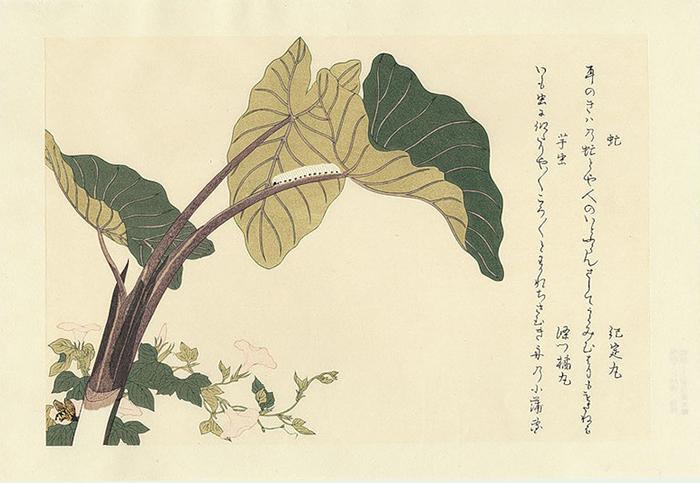 Утамаро выполнил множество иллюстраций с изображениями растений и насекомых.