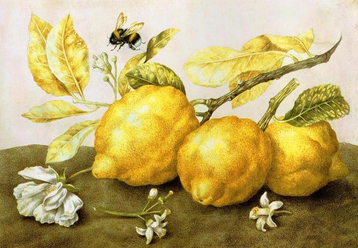 Безупречные «светлые натюрморты», которые покорили семейство Медичи и всю Италию: Джованна Гарцони