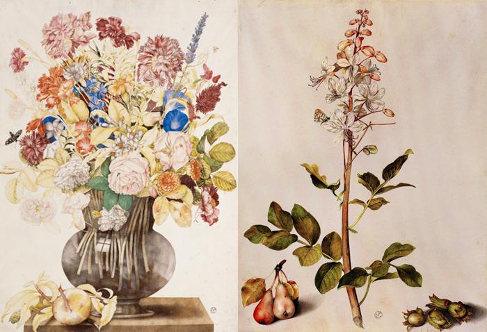Ваза с цветами. Ботаническая иллюстрация.