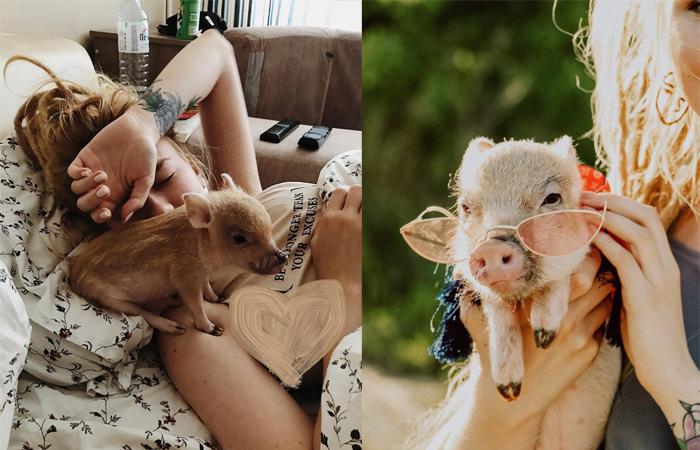 Свинка Джузеппа и ее хозяйка Настя.