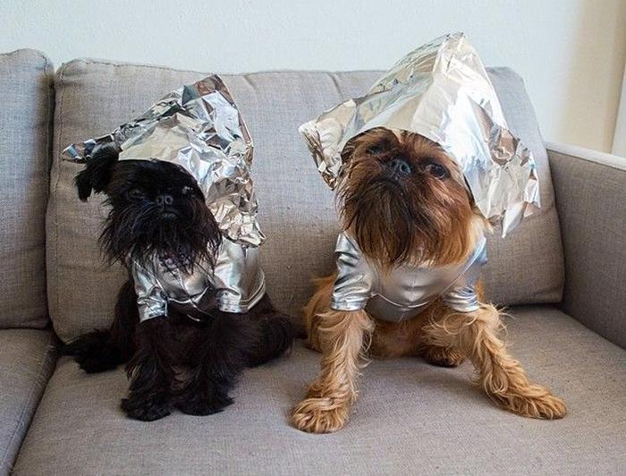 Собаки породы брюссельский грифон - Дигби и Алоизиус.