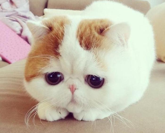 Котик Снупи.