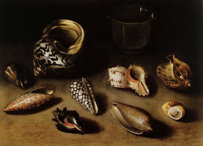 Девять экзотических ракушек.