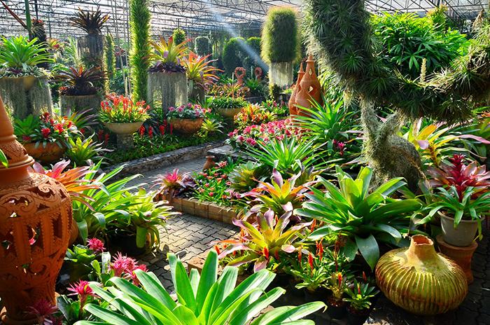 Редкие растения в парке Нонг Нуч.