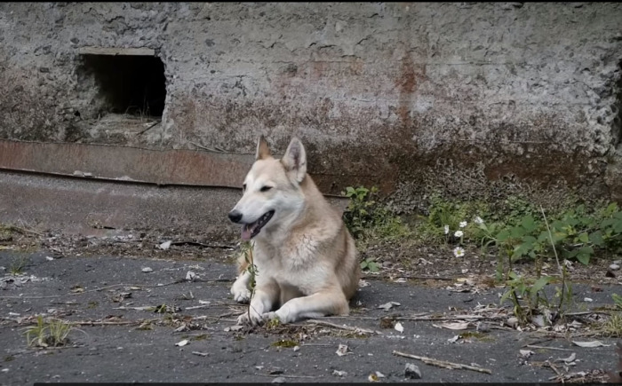 Местная собака. /Фото:Кадр из видео на youtube.com, пользователь ninurta
