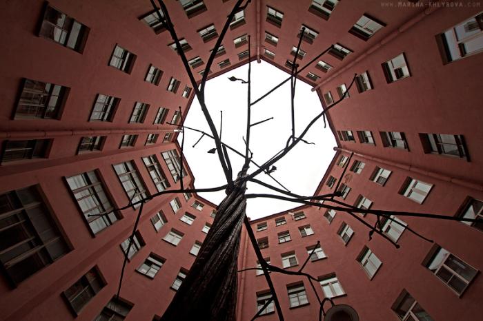 Говорят, что загадывать желание нужно, держась за металлическое дерево. /Фото:dailyway.ru