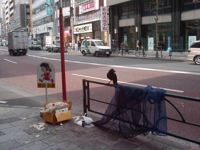 Ворона разворошила мусор. /Фото: Ю. Синалеев