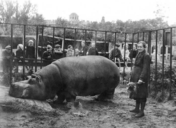 Бегемотиха Красавица и Евдокия Дашина, 1943 г. /Фото:leningradpobeda.ru