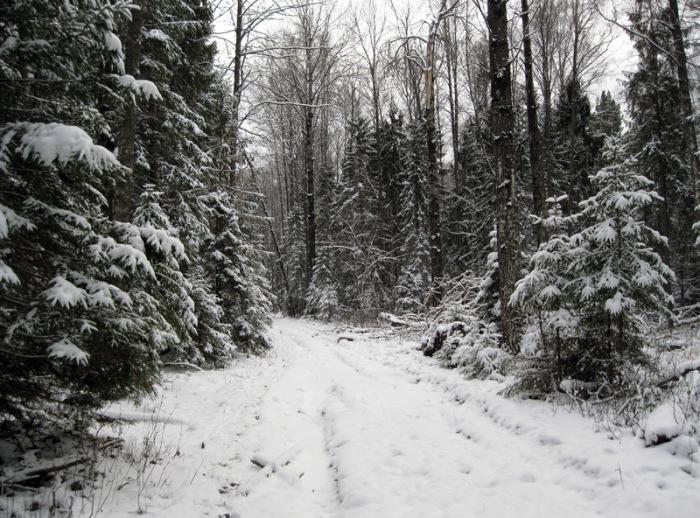 Климовский лес тоже считается аномальным местом. /Фото:photoline.ru