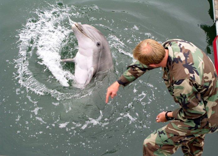 Дельфины на службе и наших, и американских войск зарекомендовали себя отлично. /Фото:topwar.ru