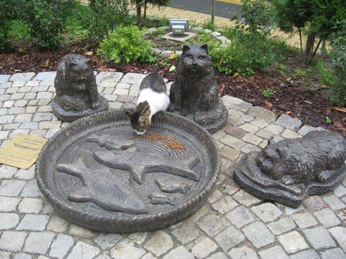 Кошки Зеленоградска. /Фото:ria.ru