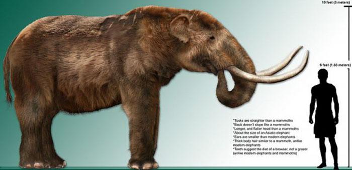Рост взрослого мастодонта по сравнению с ростом человека. /Фото:thevintagenews.com