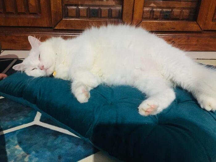 Кошечка обрела беззаботную жизнь у любящей хозяйки.