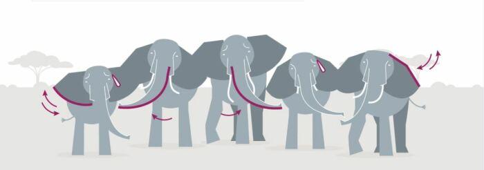 Схематичное изображение приветствия слонов. /Фото:nationalgeographic.com