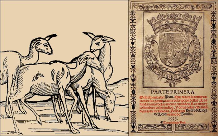 Первое в Европе изображение верблюдовых («Хроника Перу»). /Фото: vicuna.ru