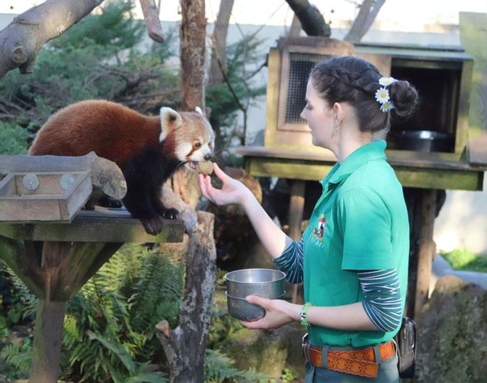 Добровольная изоляция на территории зоопарка поможет сохранить животных и птиц.