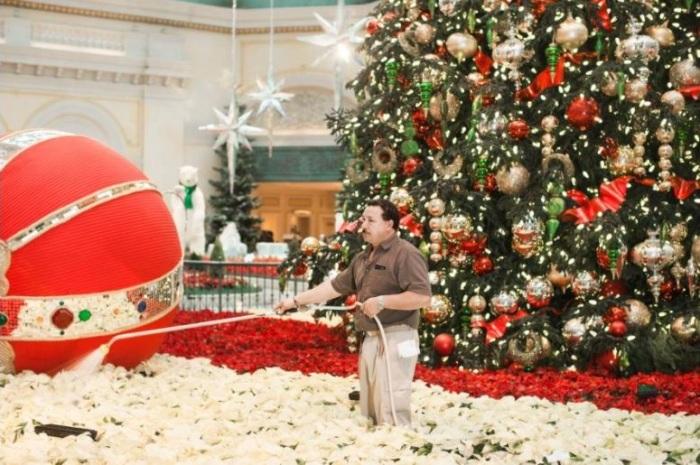 Полив цветочных композиций в Рождество.