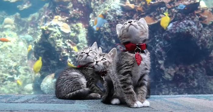 Котята в городском аквариуме.
