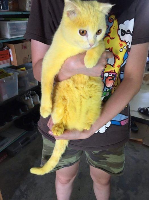 Жёлтый кот завоевал сердца интернет-пользователей.