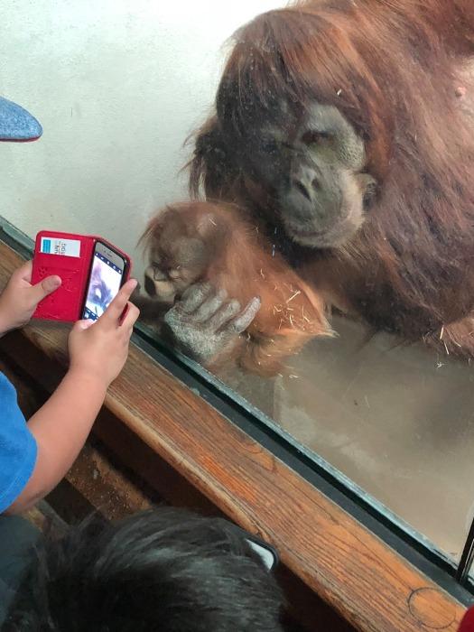 В Зоопарке Ниасу все очень любили. Она была очень популярна у посетителей. /Фото: Carol McCasland