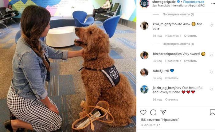 Собаки-психотерапевты очаровали как пассажиров аэропорта, так и пользователей Интернет.