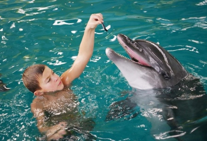 Дельфины отличные реабилитологи. /Фото:sevas.ru