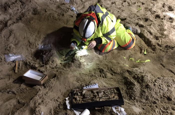 Археологи обнаружили под землей множество фрагментов древних животных. /Фото:tjournal.ru