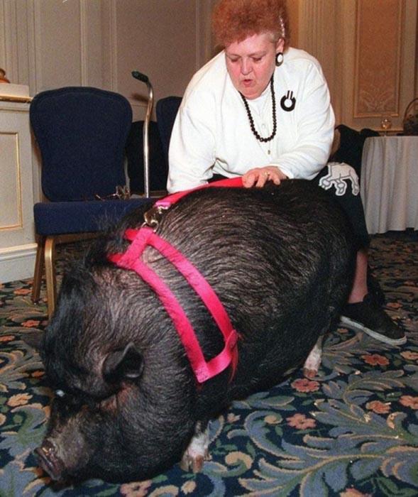 Джоанн обожает свою свинью/Фото:kashtan.me