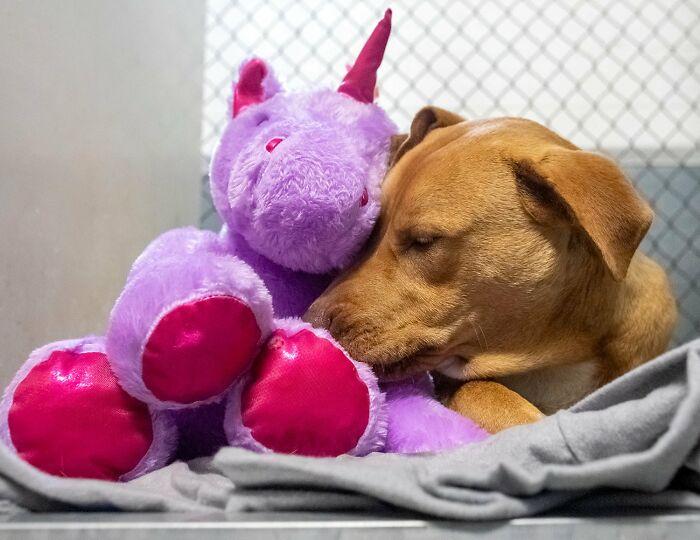 Сису никогда не расстается со своей фиолетовой игрушкой. Спит тоже вместе с ней.