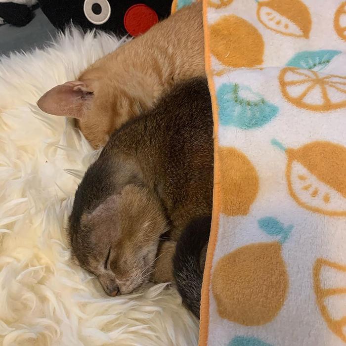 Котики спят.
