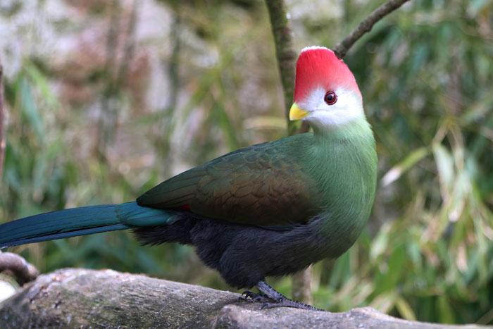 В зоопарке под открытым небом живут более 1200 птиц.