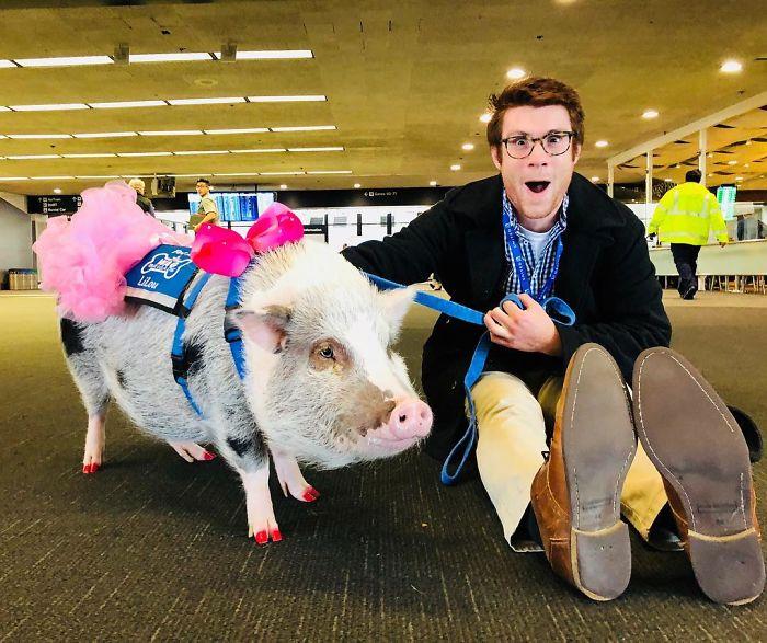 При виде животных пассажиры аэропорта приходят в восторг.