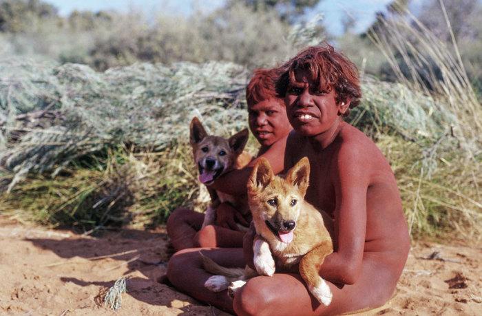 Австралийские аборигены с щенками динго. /Фото:vokrugsveta.ru