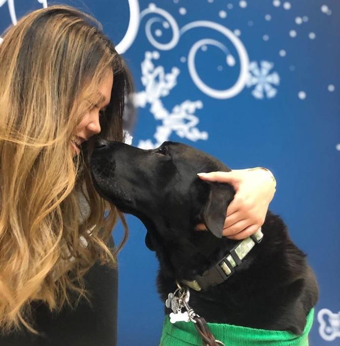 Все собаки сертифицированы и прошли специальное тестирование, так что они исключительно дружелюбны.