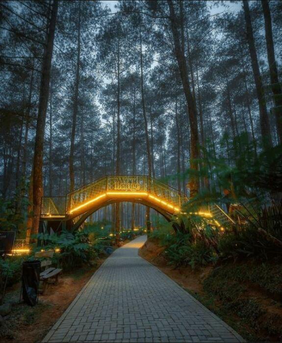 Лесной огненный мост в краю орхидей: здесь попадаешь в сказку. / Фото: Уорман Вардхани