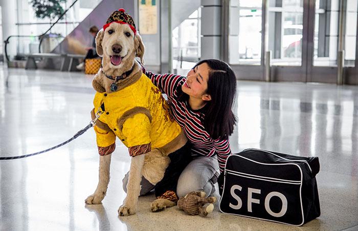Собаки помогают пассажирам избавиться от стресса.