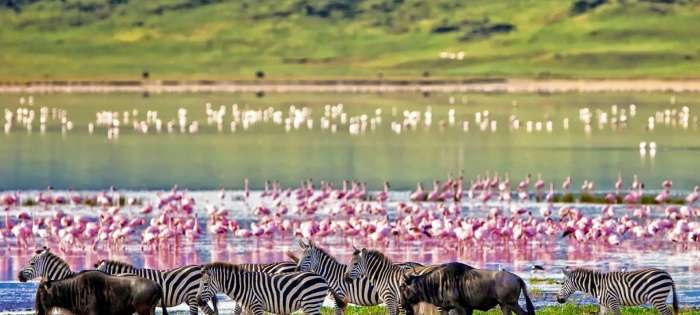 Соленое озеро притягивает фламинго и множество других видов птиц. / Фото:ngorongorocrater.com