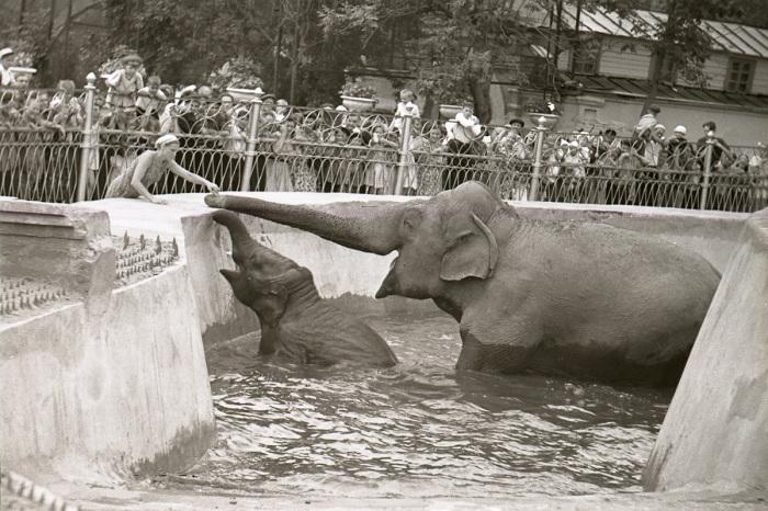 В годы войны столичный зоопарк посетило 4 млн. человек. /Фото: и архива зоопарка, strana.ru