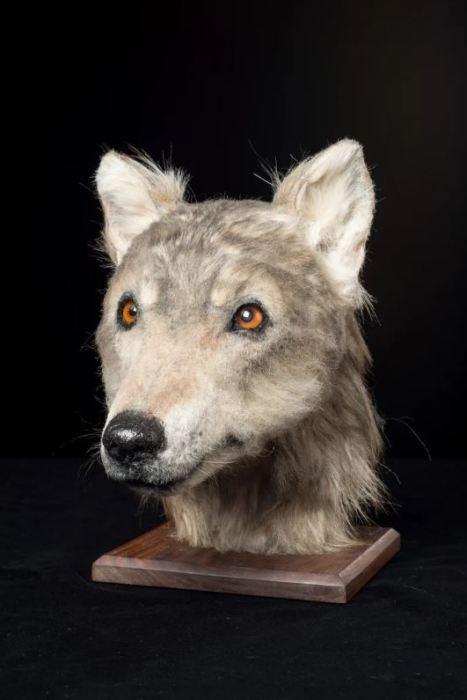 Учёные уверены, что именно так выглядел друг человека несколько тысяч лет назад.