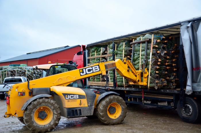 Транспортировка датских ёлок. /Фото:varlamov.ru