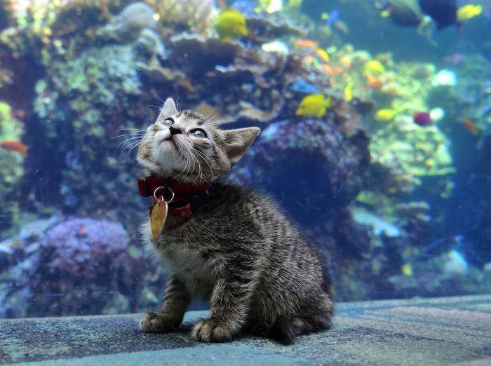 Котёнок чувствует себя в аквариуме как рыба в воде.