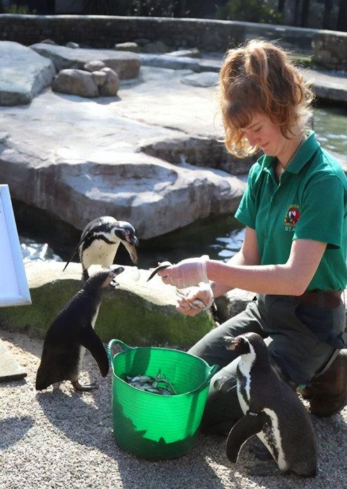 В компании пингвинов и других экзотических обитателей зоопарка три месяца пролетят незаметно.