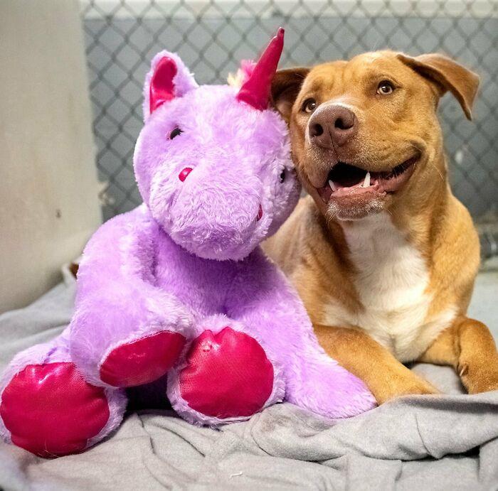 Возможно, аналогичную игрушку пёс видел в свое прежнем доме, когда был маленьким щенком.