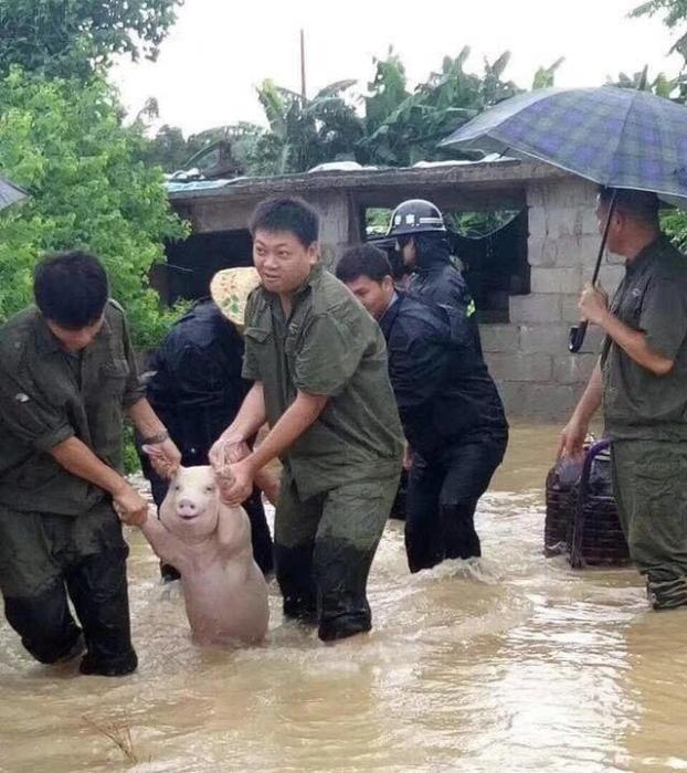 На фотографии спасенная в Китае свинья улыбалась во весь рот, и эта улыбка покорила весь мир.